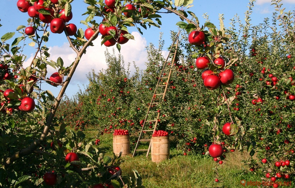 apple orchards grow all around the affordable self storage place called Safe & Secure in Bergen County